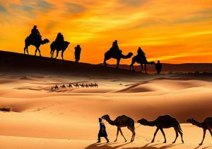 DUBAI SUNSET CAMEL TREKKING WITH BBQ DINNER AND SHOWS